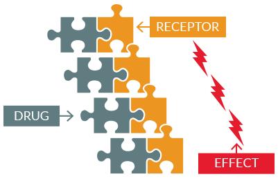 Efecto terapéutico asociado con el número de moléculas de droga en los receptores.