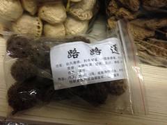 楓香成熟的果序(蒴果長成的圓球)在中藥材被稱為「路路通」。圖片攝影:文起祥。