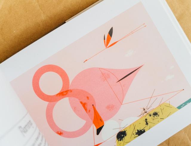 flamingo - birds & words book review