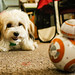 Pip and BB-8
