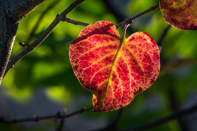 Leaf, Red, Autumn, Heart, Heart Shaped