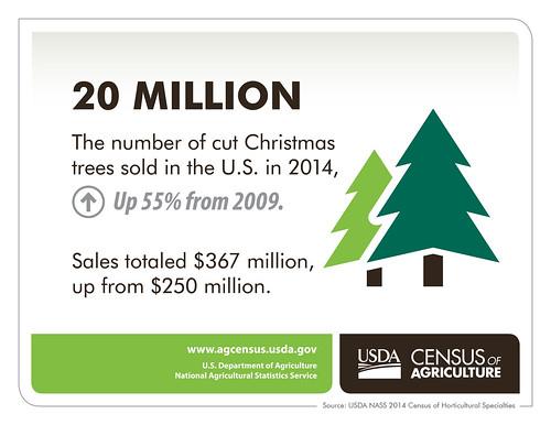 Christmas Trees infographic