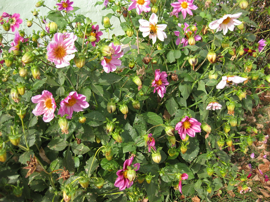 Цветы весёлые ребята