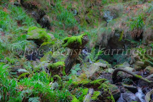 Parque Natural de #Gorbeia #DePaseoConLarri #Flickr      -1452