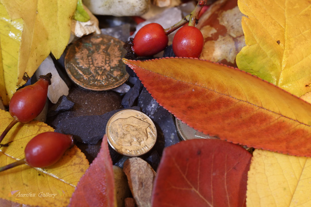 Autumn still life with coins
