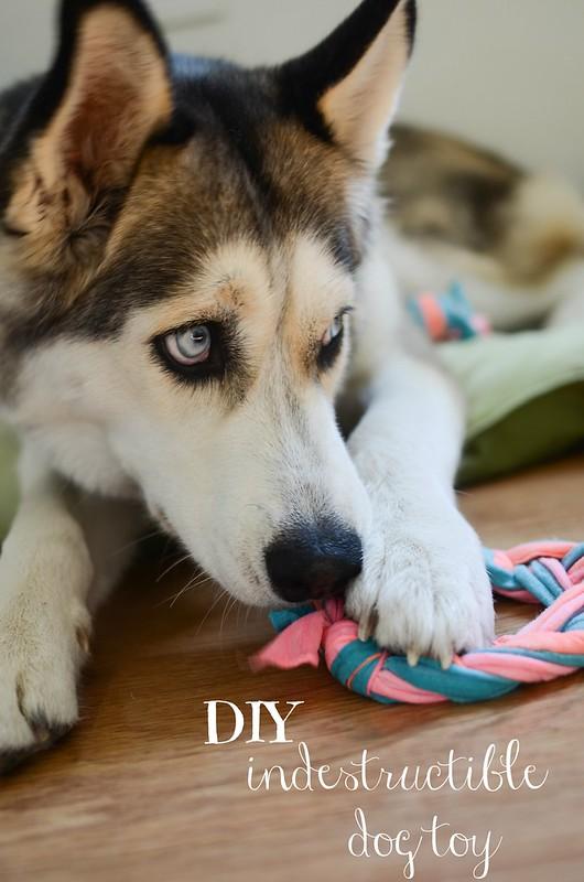 Fake Toy Dogs : Diy indestructible dog toy fake ginger