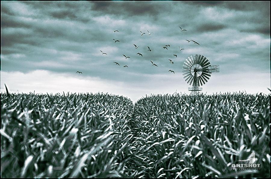 Pinwheel | Windrad