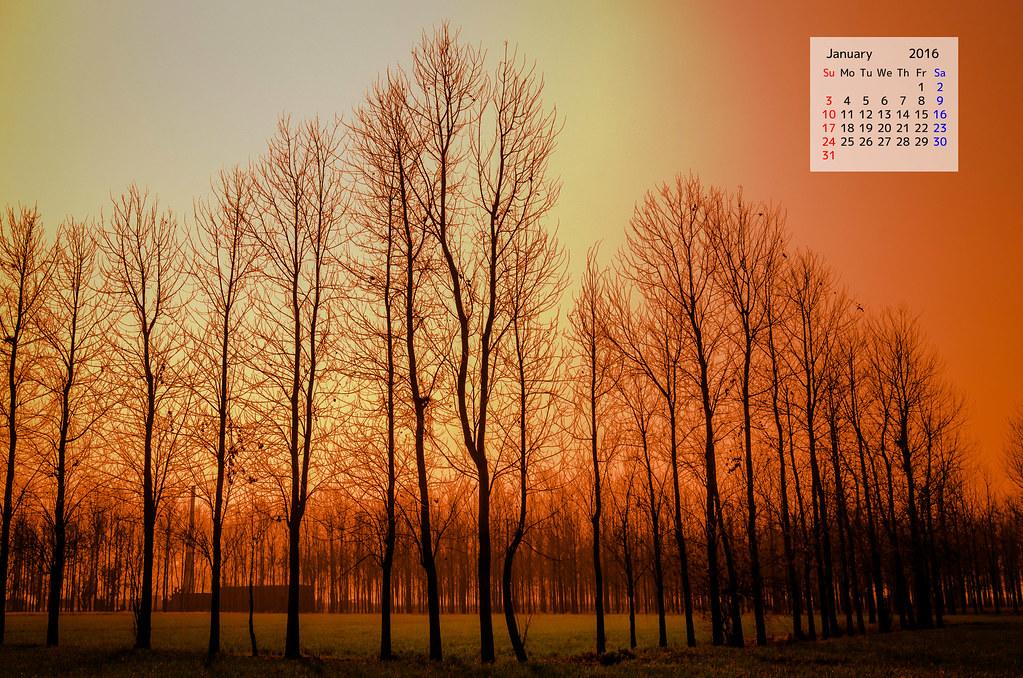 Poplar trees punjab : January 2016 Calendar Wallpaper Download
