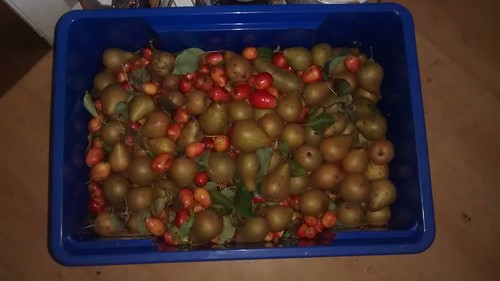 crab apples and pears Oct 16