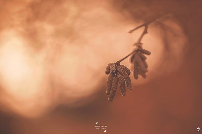 Nature beauty through catkins photographs