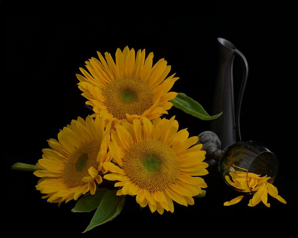summer flower retro sunshine - photo #38