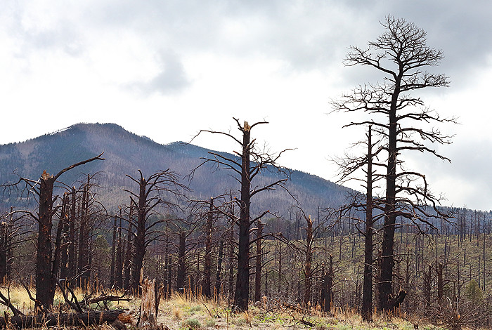 Large trees—key climate influencers—die first in drought