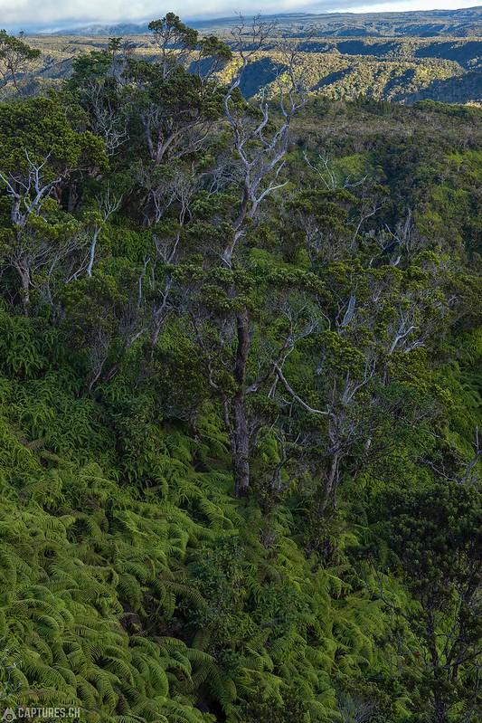 Green - Kauai