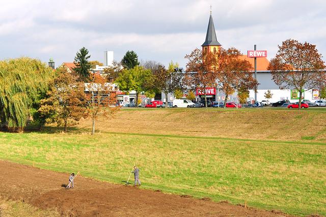 Mannheim-Seckenheim ... Spaziergang am Neckarufer ... November 2016 ... Naturschutzgebiet Unterer Neckar ... Seckenheim, Ilvesheim, Neckarplatten ... Neckarbrücke ... Altneckarschleife ... St. Aegidius-Kirche ... Häuserzeile ... Schloss ... Fotos und Collagen: Brigitte Stolle