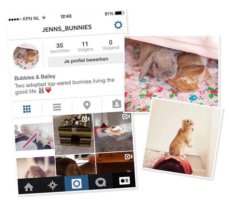 My bunnies instagram, foreverpetite.net