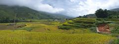 Rice Terraces in Sa Pa, Vietnam