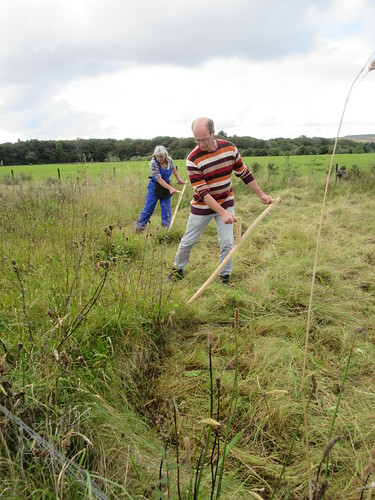scything a wildflower meadow in Scotland