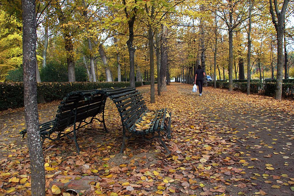 hojas aposentadas