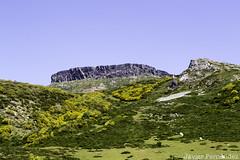 Peña Labra (2.018 m) (12-07-2015)