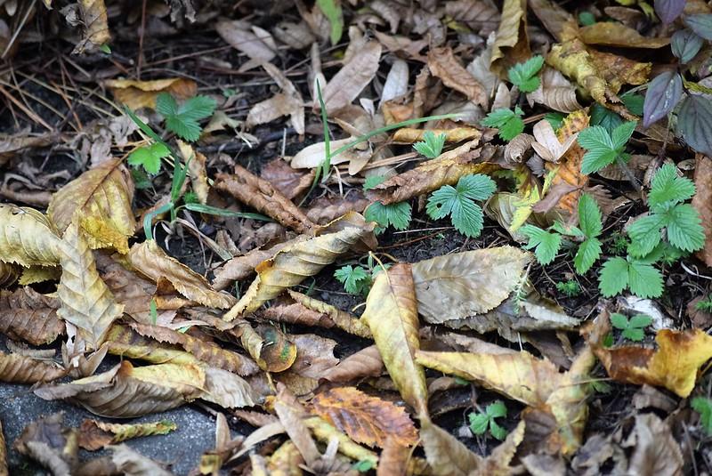 Autumn Leaves 28.10 (2)