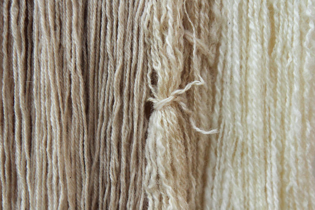 Lichen dyed yarn (left) with undyed yarn (right) for comparison