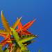 秋天來了|Olympus 25mm f/1.2 PRO