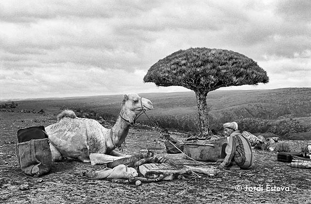 Fotografía de Socotra (Jordi Esteva)