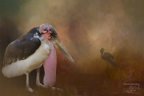 Painted image of a Marabou Stork