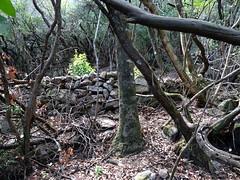 La 3ème carbonara du sentier de Petra Stretta
