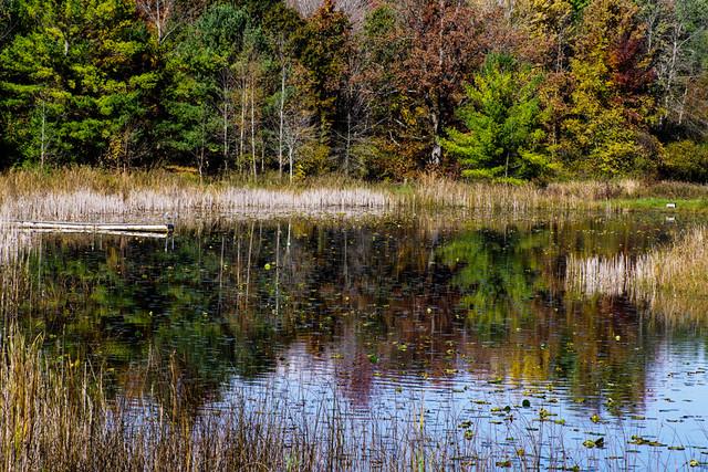 Chippewa Nature Center Wetlands
