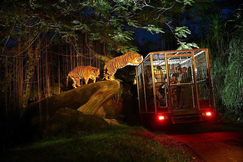 4. Night Safari Tiger experience by Bali.tamansafari.com