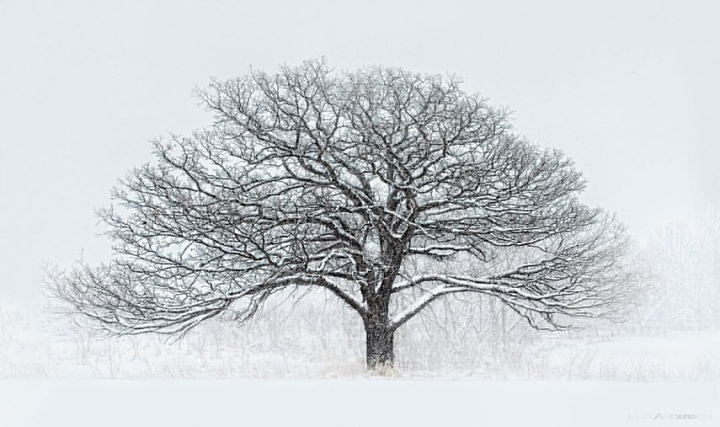 winter tree 12 by matt anderson a snow storm blizzard i