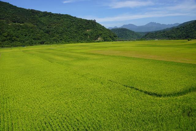 4.位於玉山國家公園南安遊客中心前方優美的稻田景觀