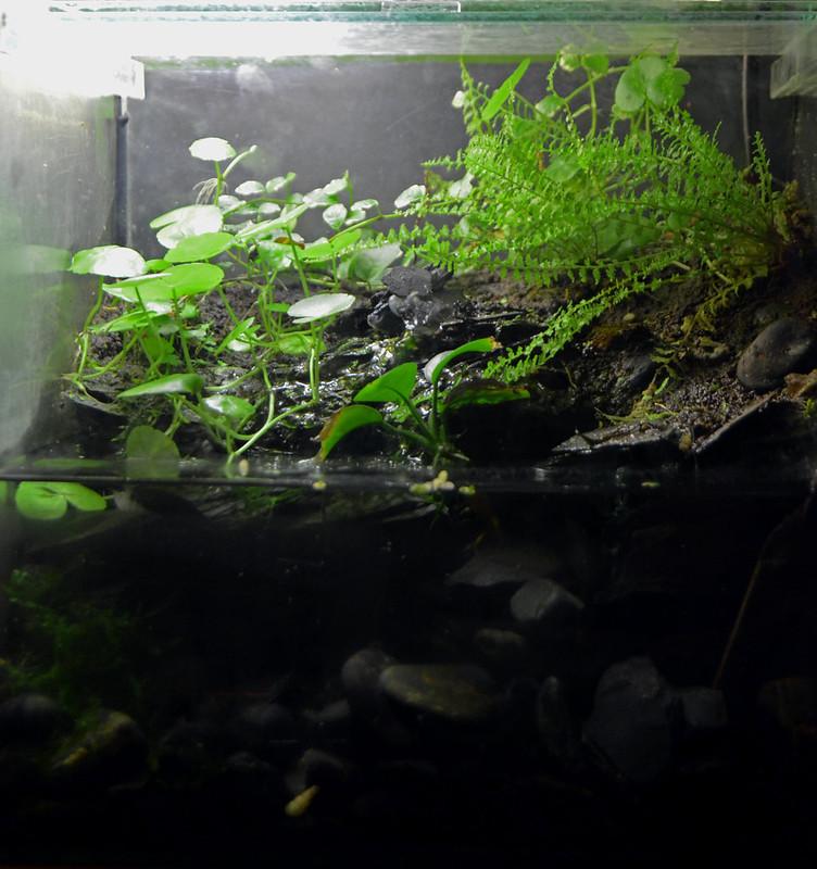 Nuevo acuaterrario - Página 4 21874511823_480200283a_c