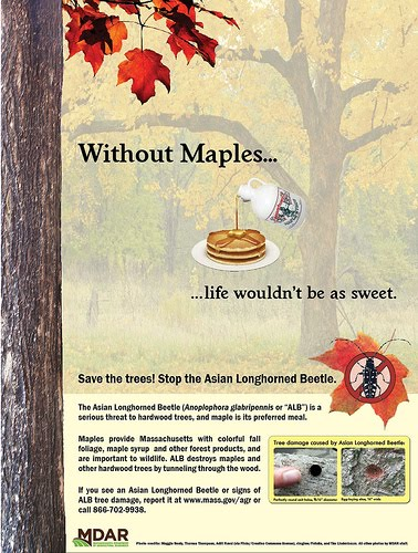 ce835ac9ab2 Oh Maple Syrup