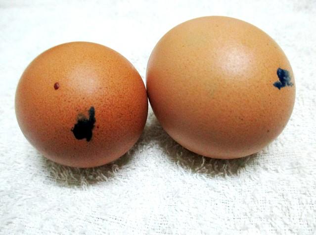 Kampung chicken eggs