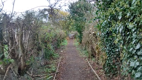 hedge cut Oct 16 2