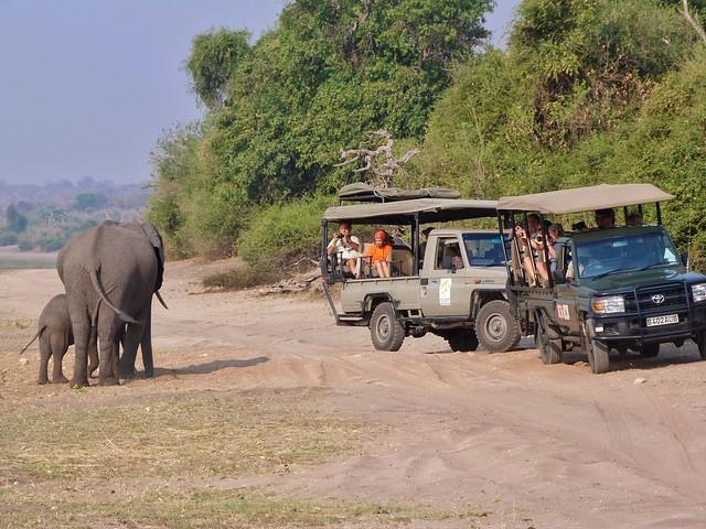 Safari en Botswana (Foto tomada en el Chobe NP)