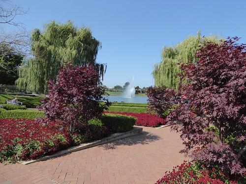 Glencoe Il Chicago Botanic Garden Japanese Maple Trees