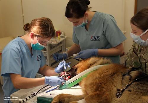 Dog Training Melton Mowbray