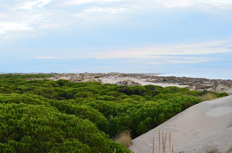 PN. Doñana, dunas, pinos y bichos 23441501165_4e3558e521_c