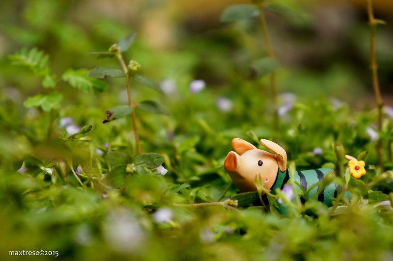 Watermelon Pugi pig of Capcom's Monster Hunter frolicking in the garden