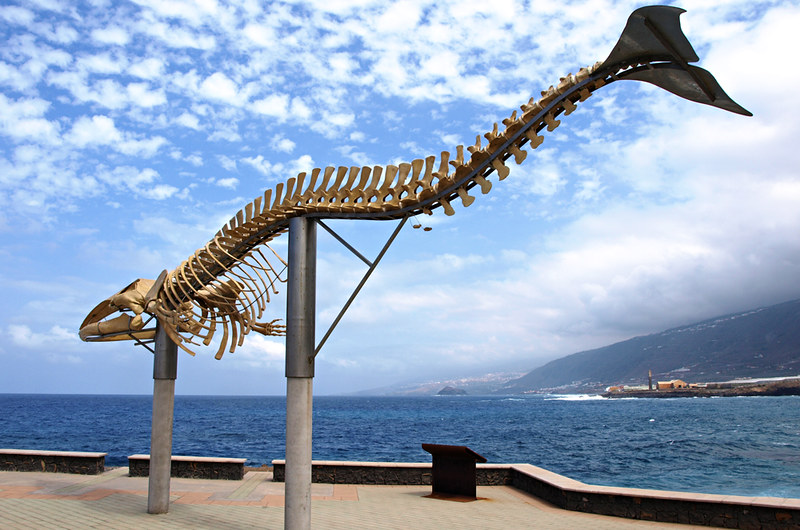 The Whale, Los Silos, Tenerife