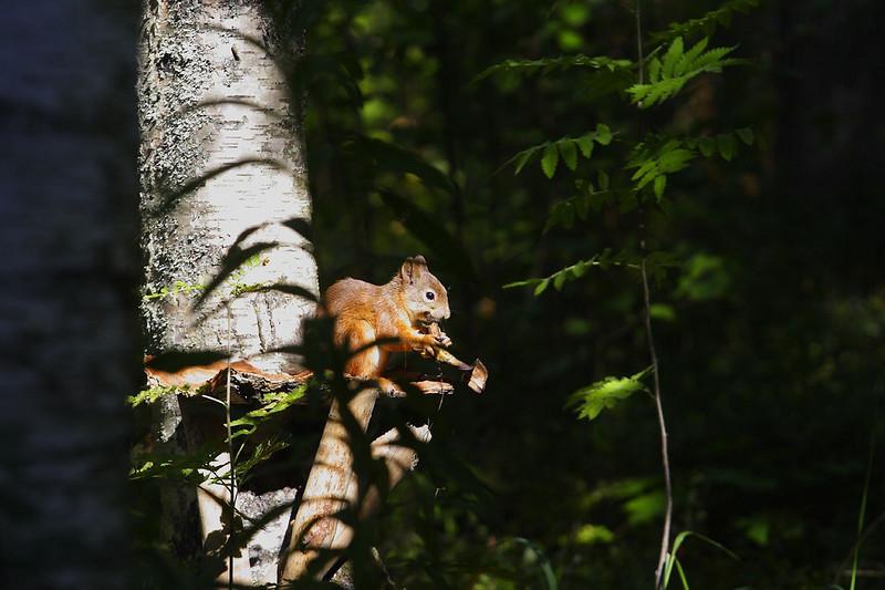 枝葉掩映的動物主體不只真實,也別有一番美感
