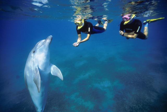 與海豚共游。攝影:Tony Malkevist。圖片來源:Israeli Ministry of Tourism(CC BY-ND 2.0)