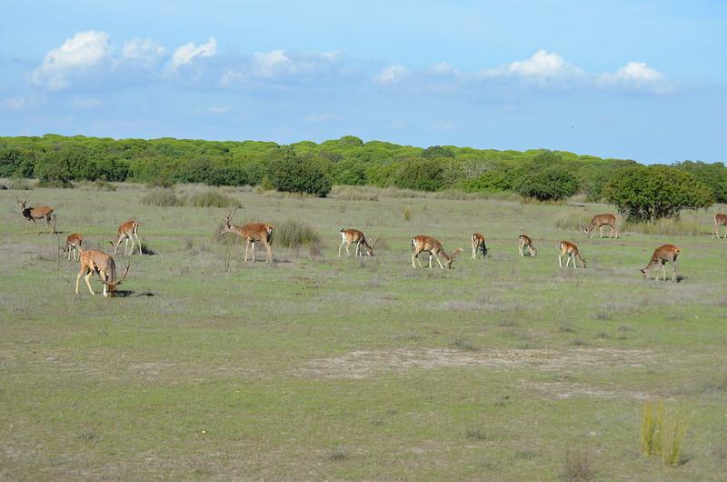 PN. Doñana, dunas, pinos y bichos 23441363215_fb5c250ec9_c