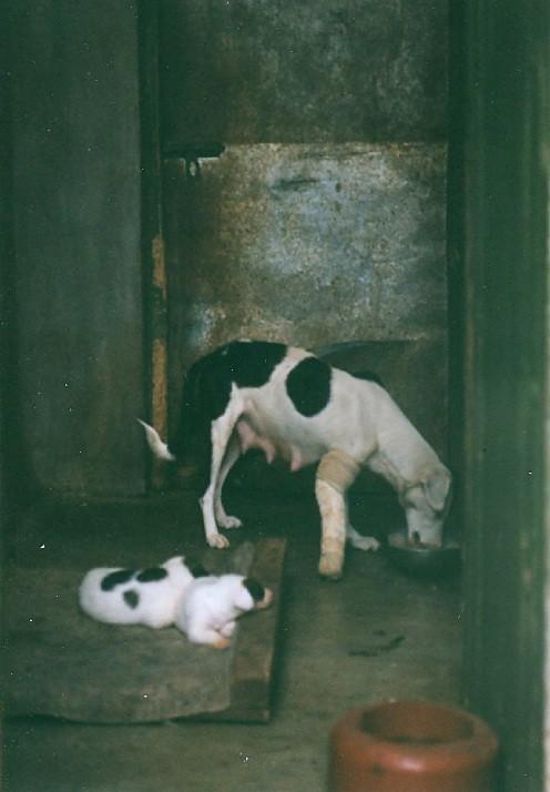 Dog Eats Leg Vedio