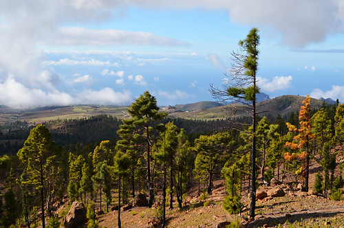 Into the pines, Vilaflor, Tenerife
