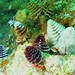 Christmas Tree Worms, different colors
