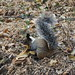Eichhörnchen mit Banane
